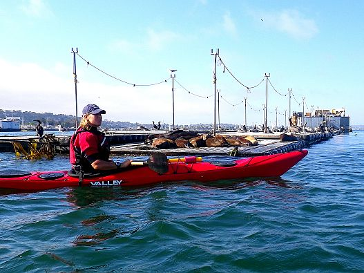 BCU-3-star-training-with-Aqua-Adventures-Sea-Lions-in-San-Diego-Bay