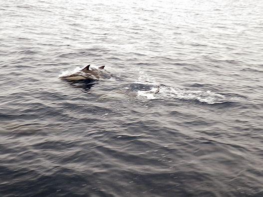 Sea kayak adventure, paddling with dolphins, California sea kayaking